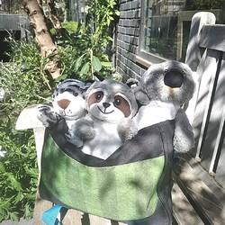 Notre bande de joyeux lurons est fin prête pour retourner sur les bancs de l'école 😂⠀⠀⠀⠀⠀⠀⠀⠀⠀ ⠀⠀⠀⠀⠀⠀⠀⠀⠀ Et chez vous, quelle est l'humeur générale en ces derniers jours de vacances ? ⠀⠀⠀⠀⠀⠀⠀⠀⠀ ⠀⠀⠀⠀⠀⠀⠀⠀⠀ #peluche #bouillotte #pelucho #bouillotteseche #détente #rentrée #école #peluches #jouetbébé #jouet #tigre #koala #ratonlaveur